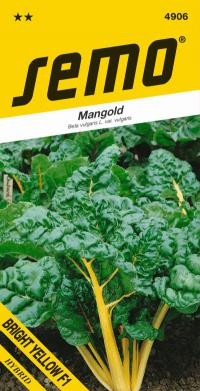 Beta vulgaris var. vulgaris  BRIGHT YELLOW F1 - mangold (SEMO)