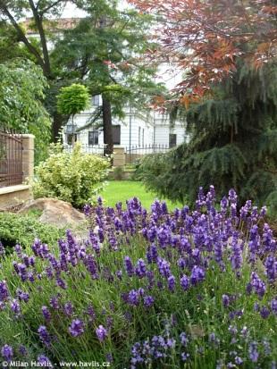 fotogalerie lavandula 1 zahrada. Black Bedroom Furniture Sets. Home Design Ideas