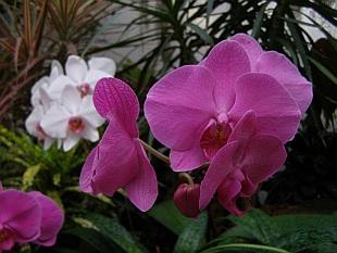 4641-orchideje-1.jpg