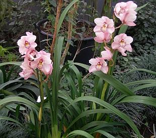 4685-orchideje.jpg