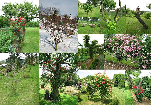 314-zahradka-marty.jpg