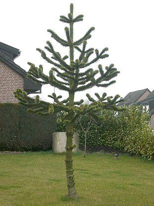 400-strom.jpg