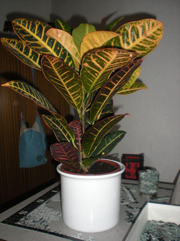 451-pokojova-rostlina-2.jpg
