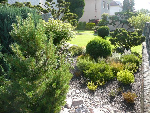 562-bonsaje-v-zahrade-7.jpg