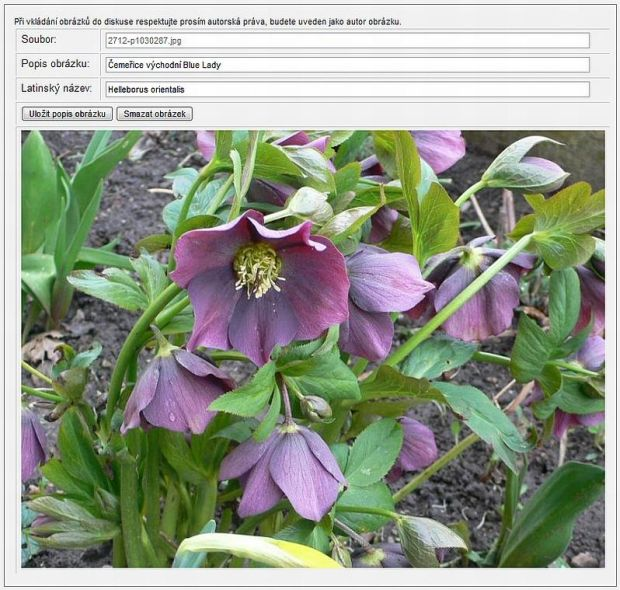 6176-editace-obrazku.jpg