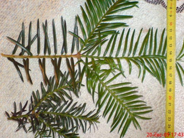 http://www.zahrada-cs.com/images_forum/628-neznamy-strom.jpg
