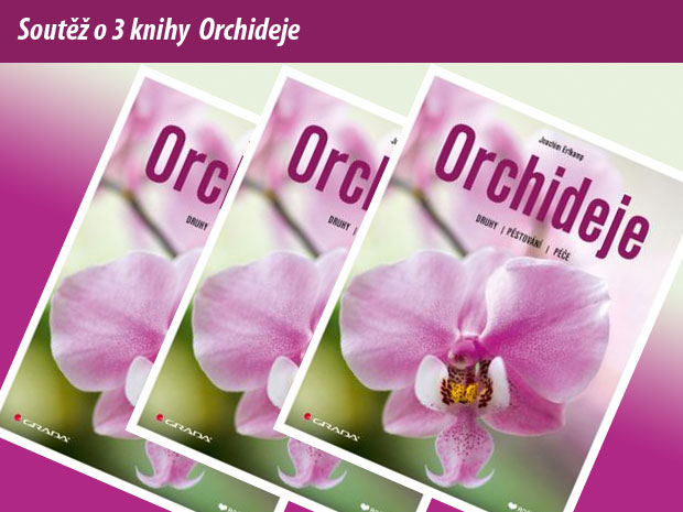 8021-soutez-orchideje.jpg