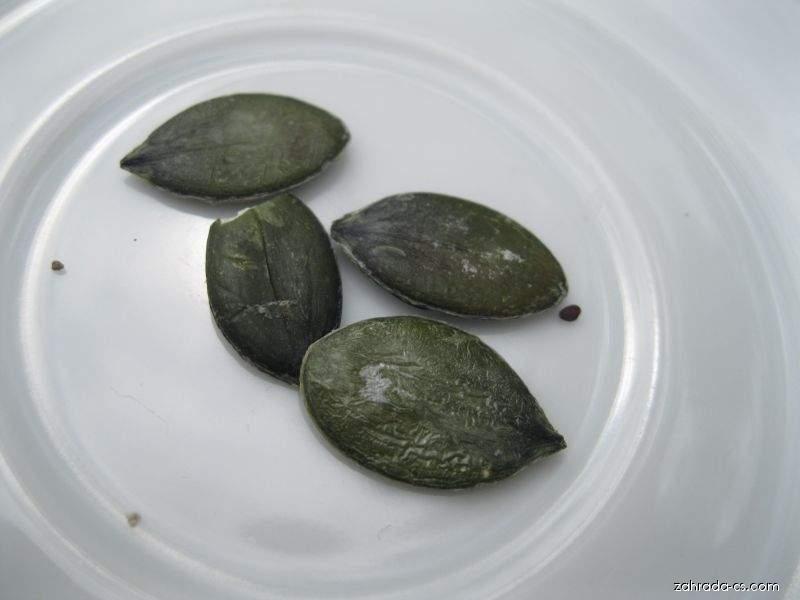 Tykev olejná - semena (Cucurbia pepo var oliefera)