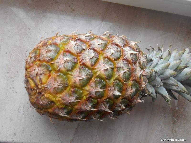 Ananasovník chocholatý - plod (Ananas comosus)