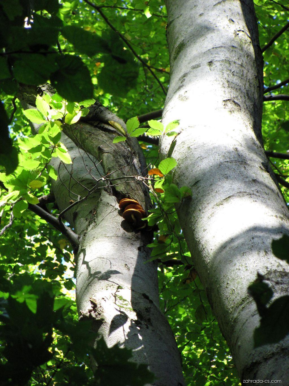 Arboretum Křtiny - houby, houbaři hledejte