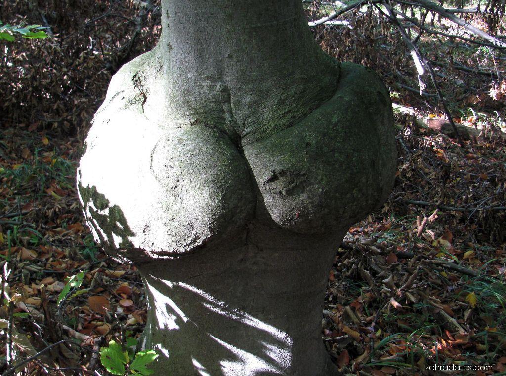 Arboretum Křtiny - někdy je les malinko neslušný