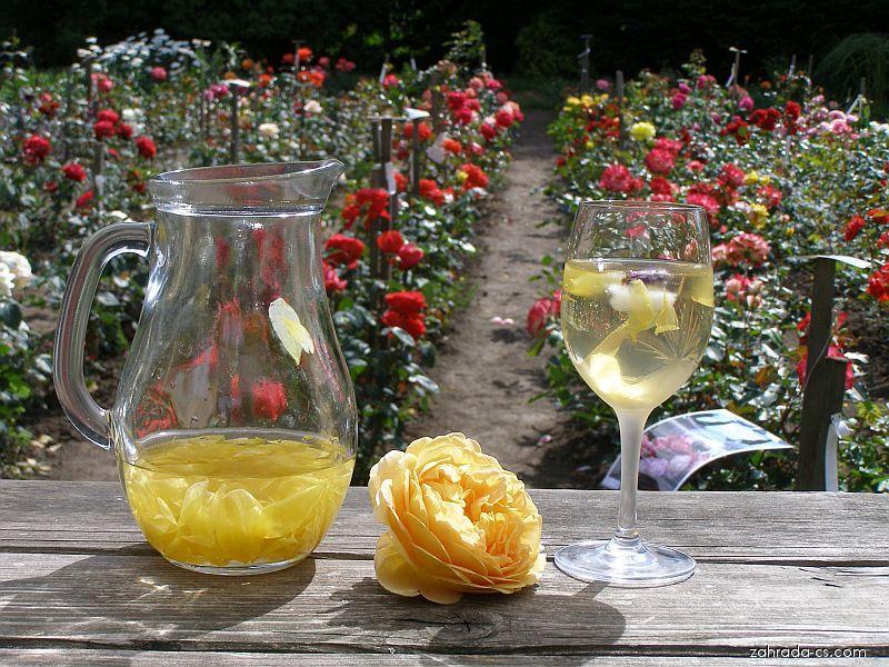 Nápoj z květů a květ růže Graham Thomas